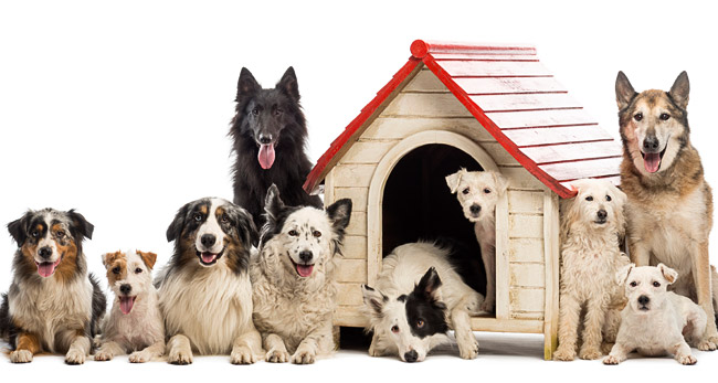 Dog Sitters, Boarders & Daycares