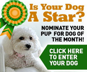 Is your dog a star? Nominate your pup for dog of the month! Click Here
